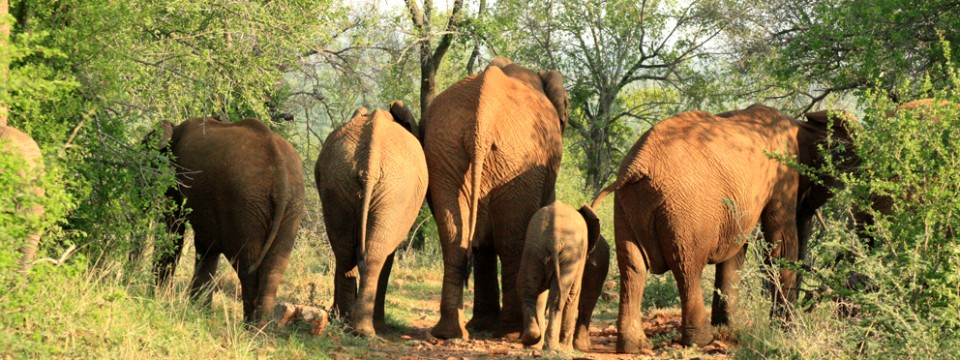 South Africa welcomes tourists