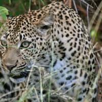 Afrikas djur